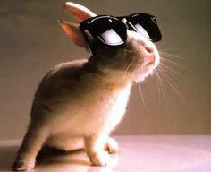 bunny with glassess